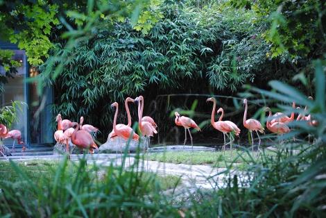 Flamingo_Vienna_Zoo_Schönbrunn_2010.jpg